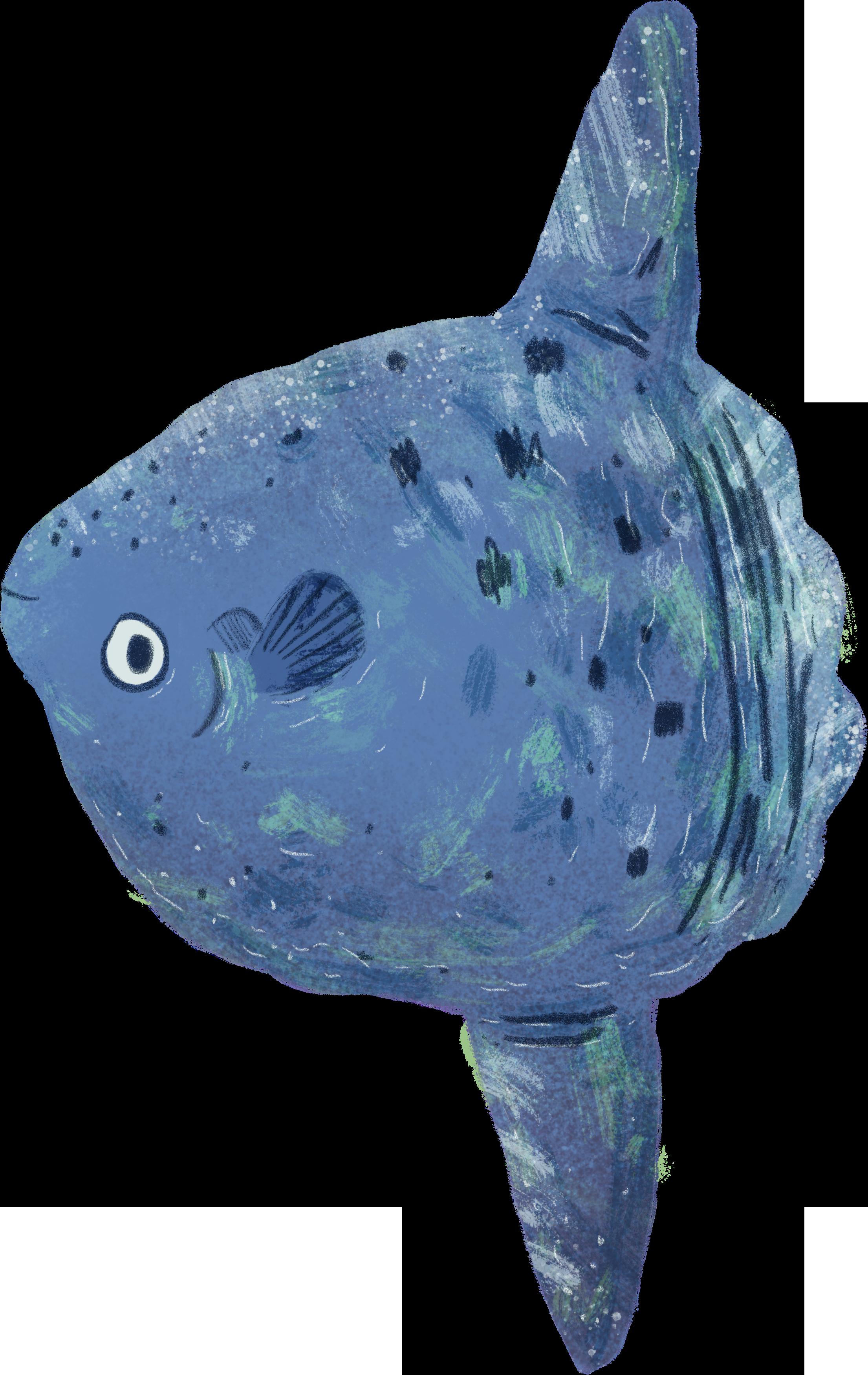 Fish029.png