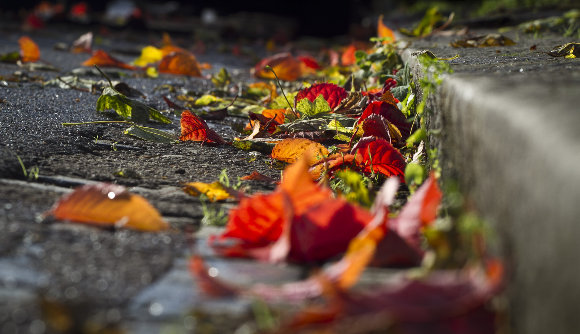 Autumn in the gutter, London