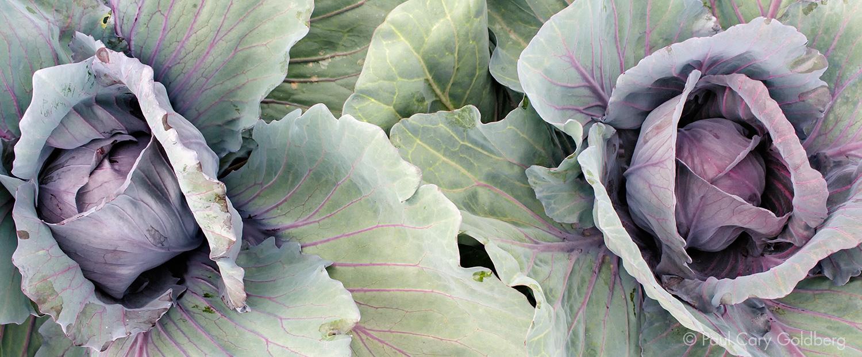 CSA_Cabbage.jpg