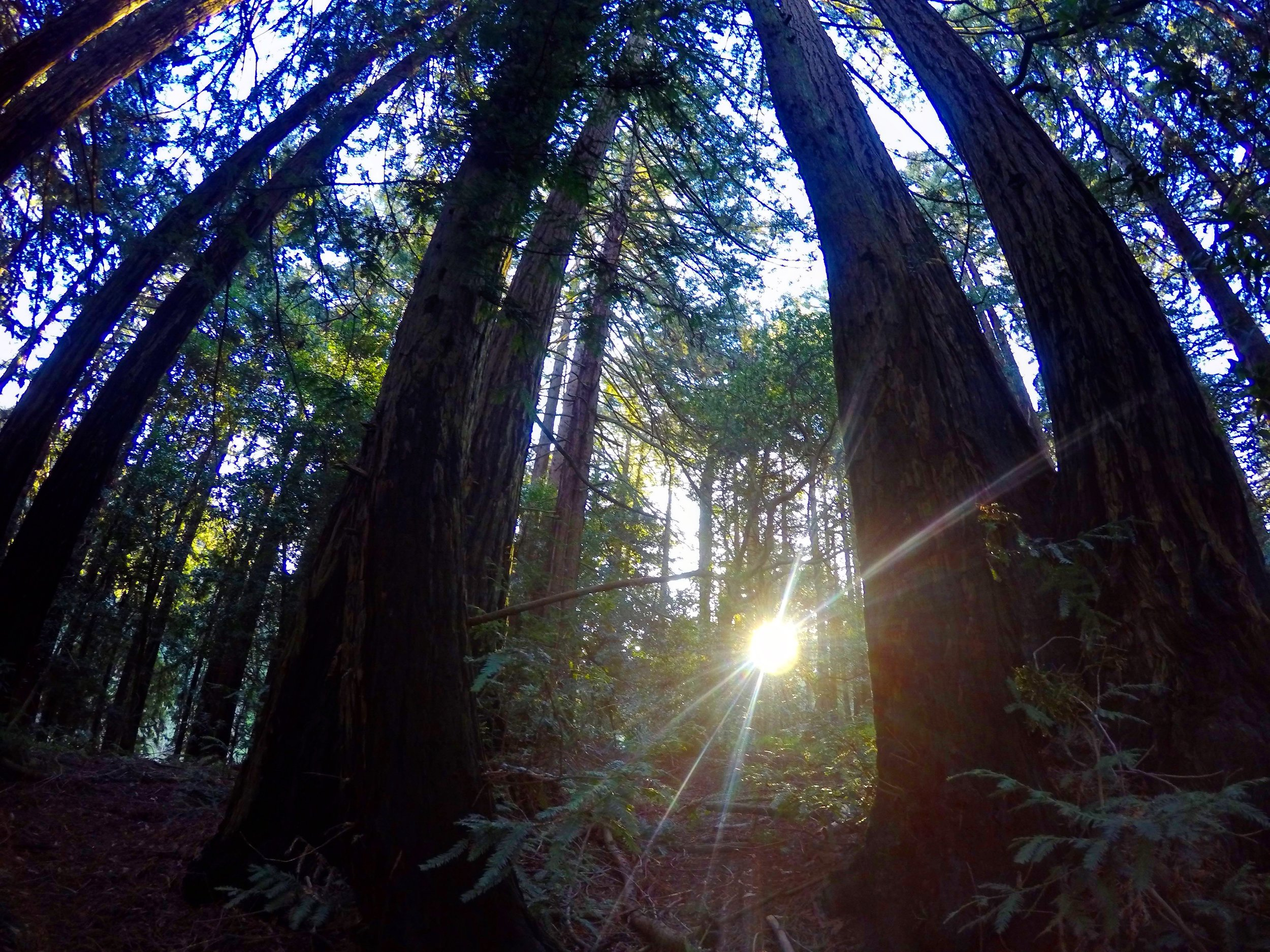 Sunrise miles at Redwood Regional Park