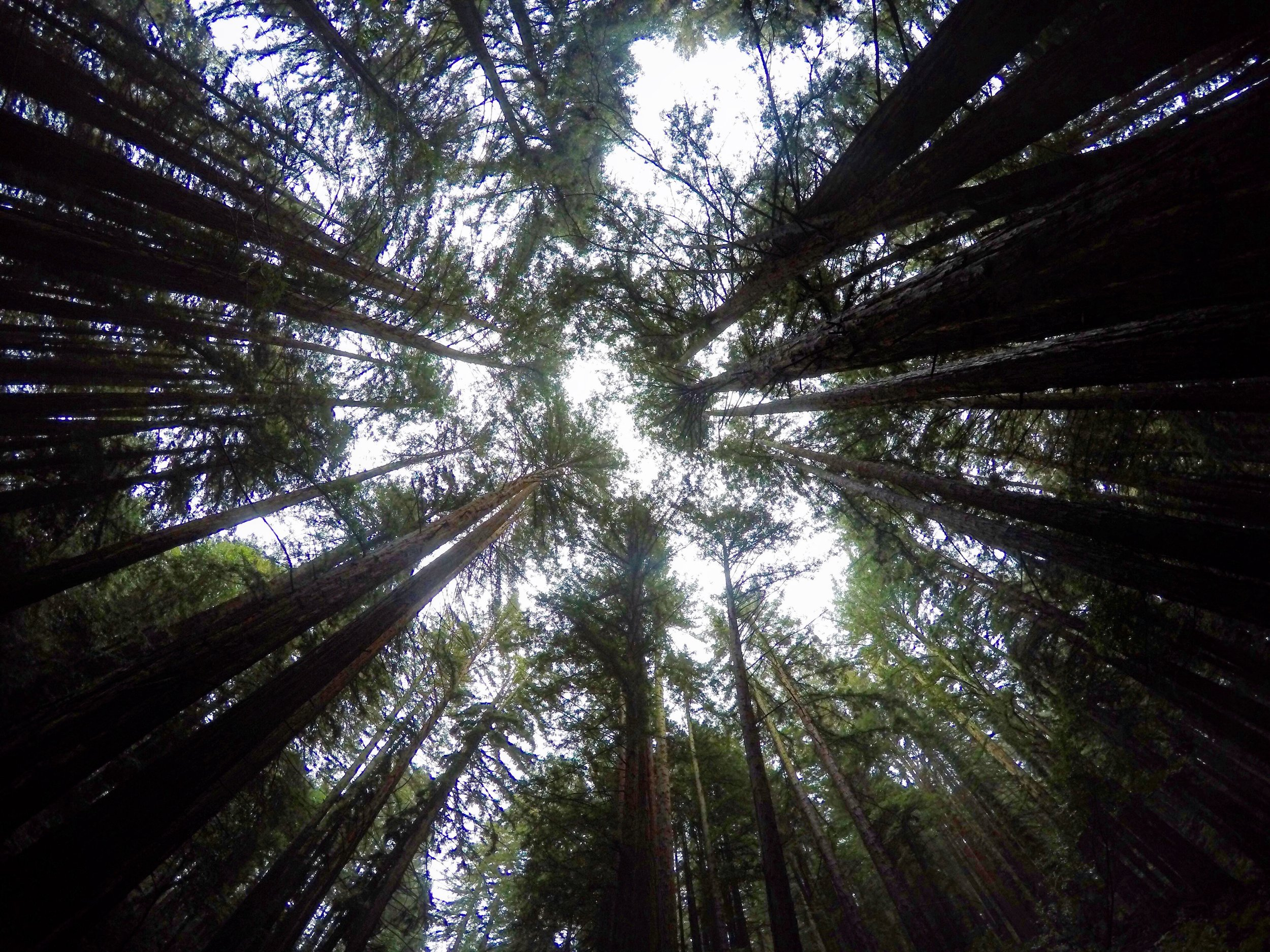 Redwood Regional Park, Oakland.