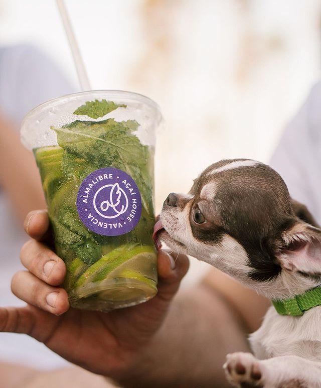 Mantente hidratado este verano con nosotros 💜🐶 Estamos en: 📍Granada 📍Barcelona 📍Valencia 📍Miami