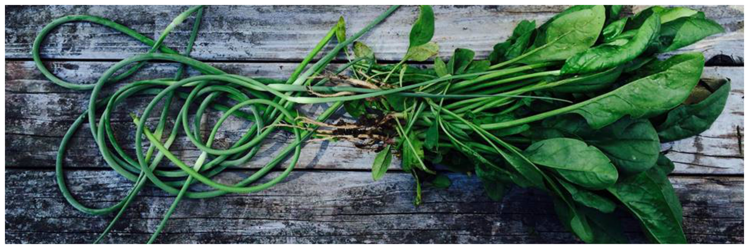 garlic scape & spinach harvest