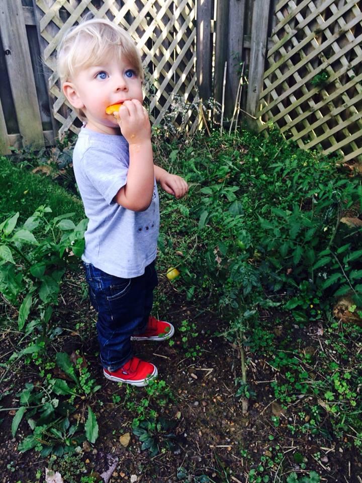 October 6, 2015 ·   Enjoying citrus among green tomatoes.