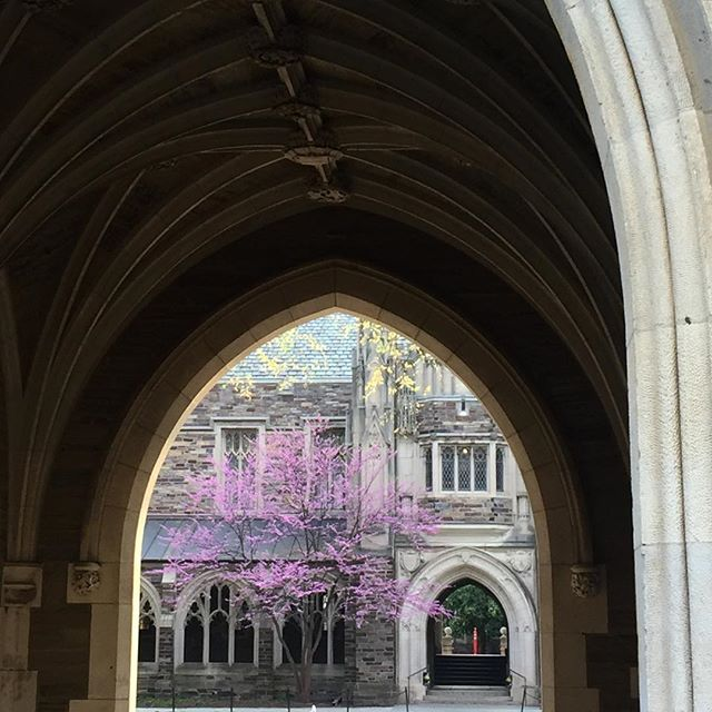 Princeton's pink light at the end of the tunnel 🌸 #springtime