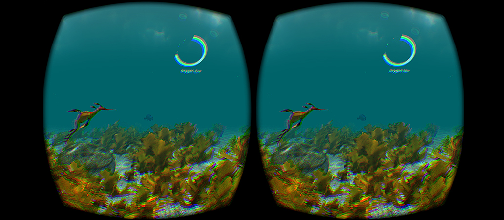 Kelp, a weedy sea dragon, and a blue groper in the distance, viewed through the Oculus Rift.