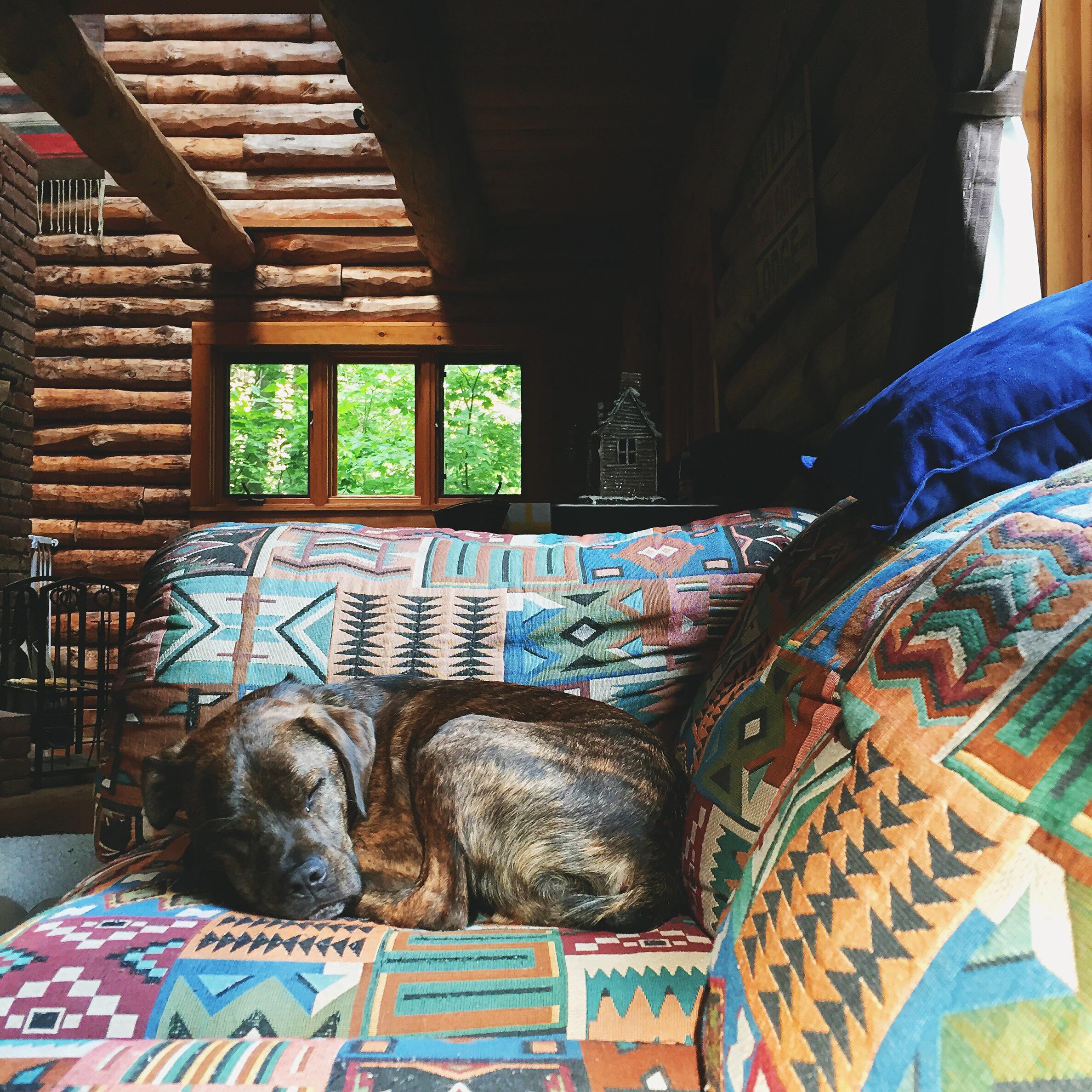 Bernie, Vinny's sister's pup