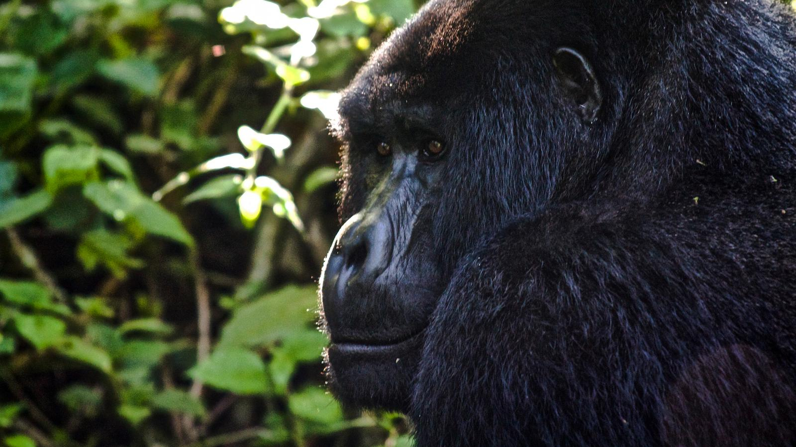 culture wildlife uganda rwanda gadv header.jpg