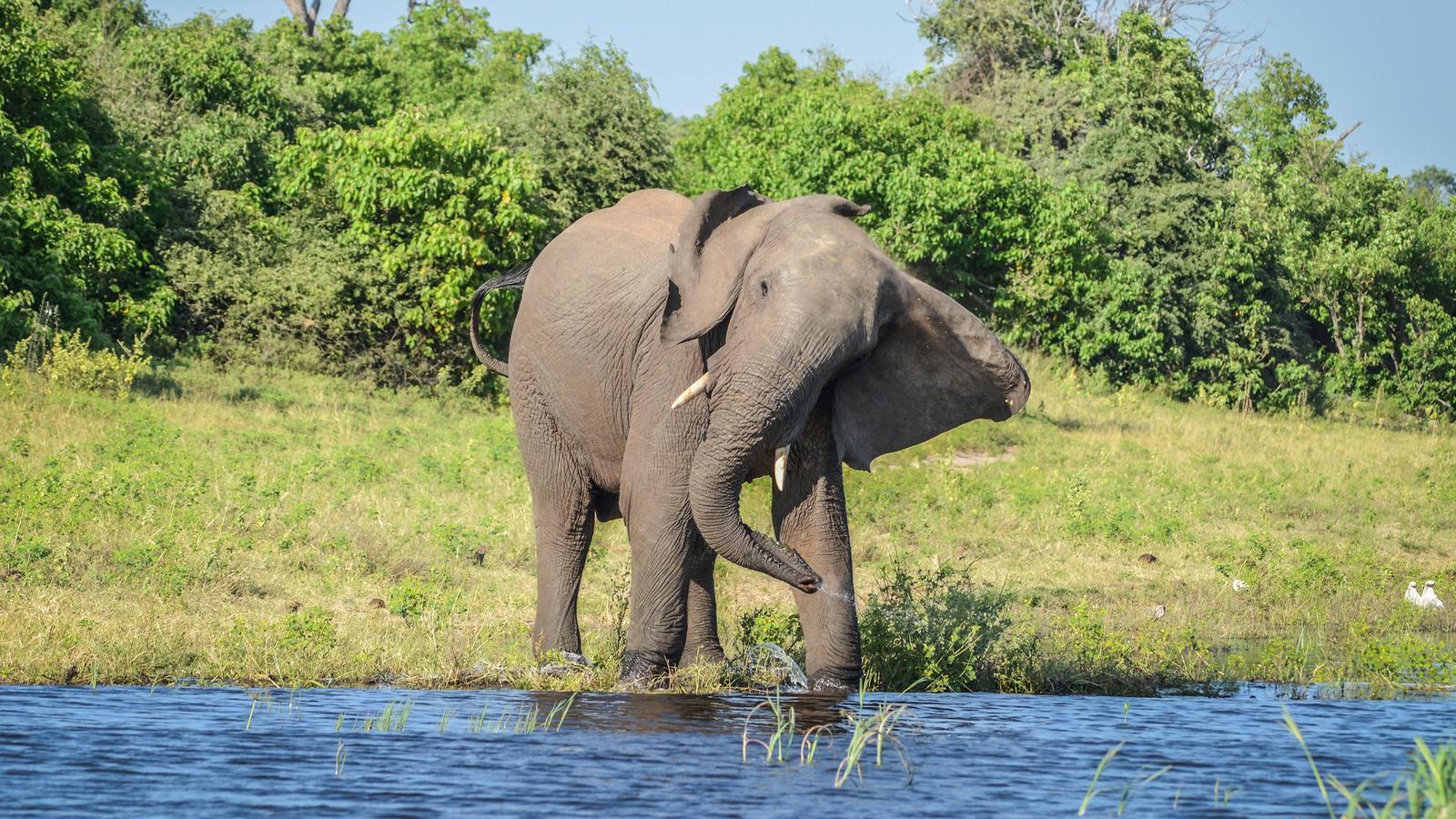 botswana victoria falls adventure gadv header.jpg