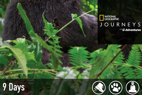 rwanda-uganda-gorilla-discovery.png