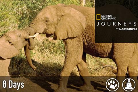 kenya-safari-experience.png