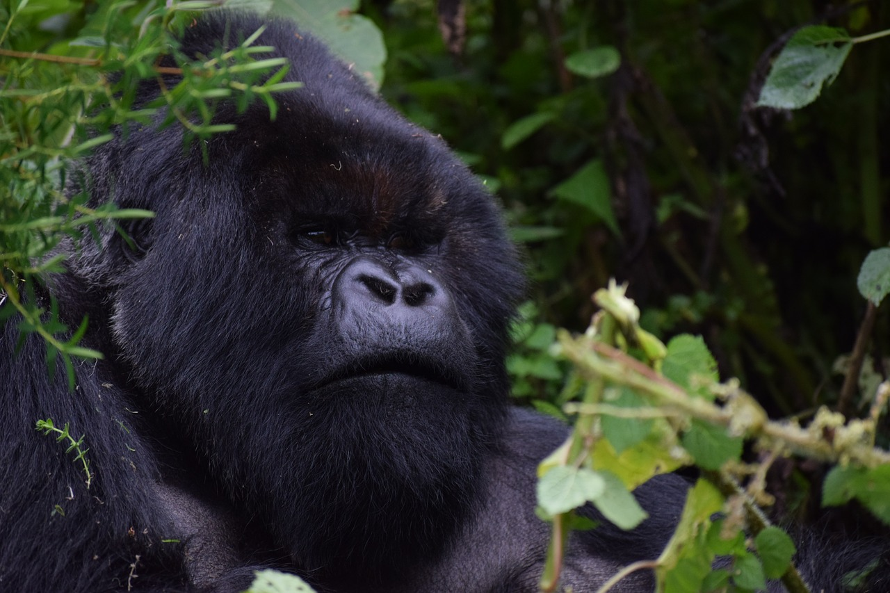 RWANDA & UGANDA -