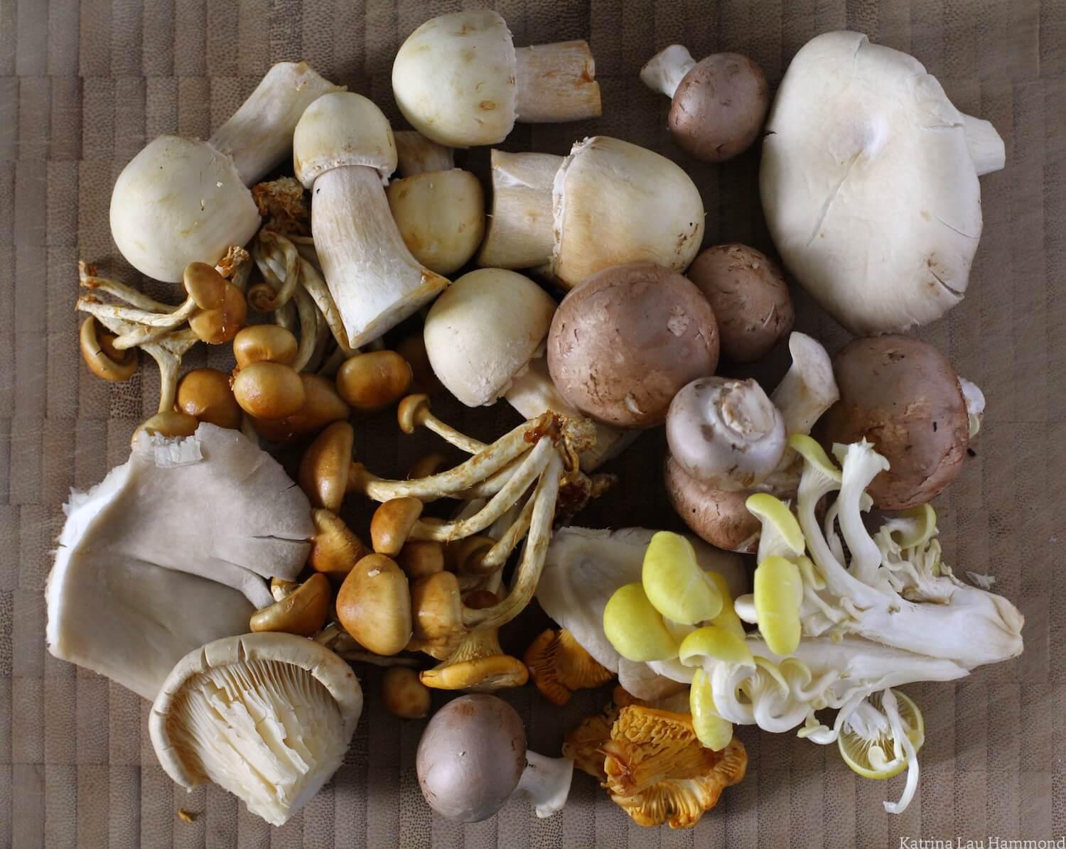 Wild_mushrooms_001_KLH.jpg