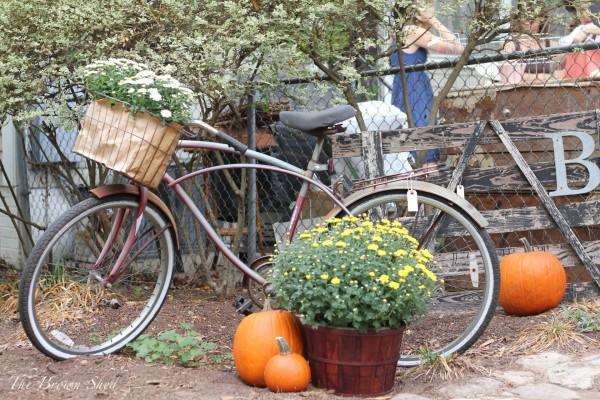 shed sale   thebrownshed.com
