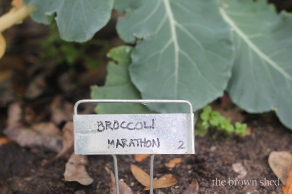 my potager | thebrownshed.com