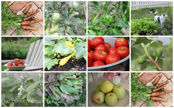 garden collage | thebrownshed.com
