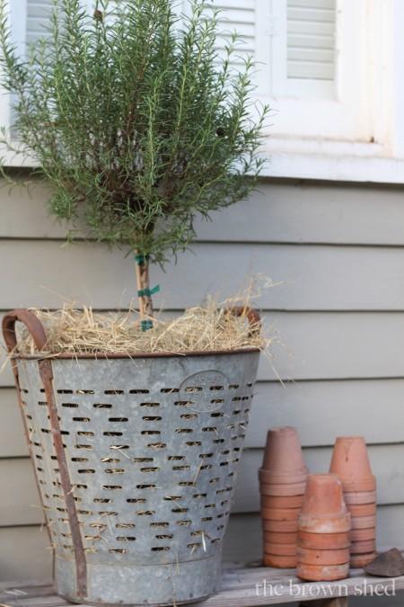 olive bucket | thebrownshed.com