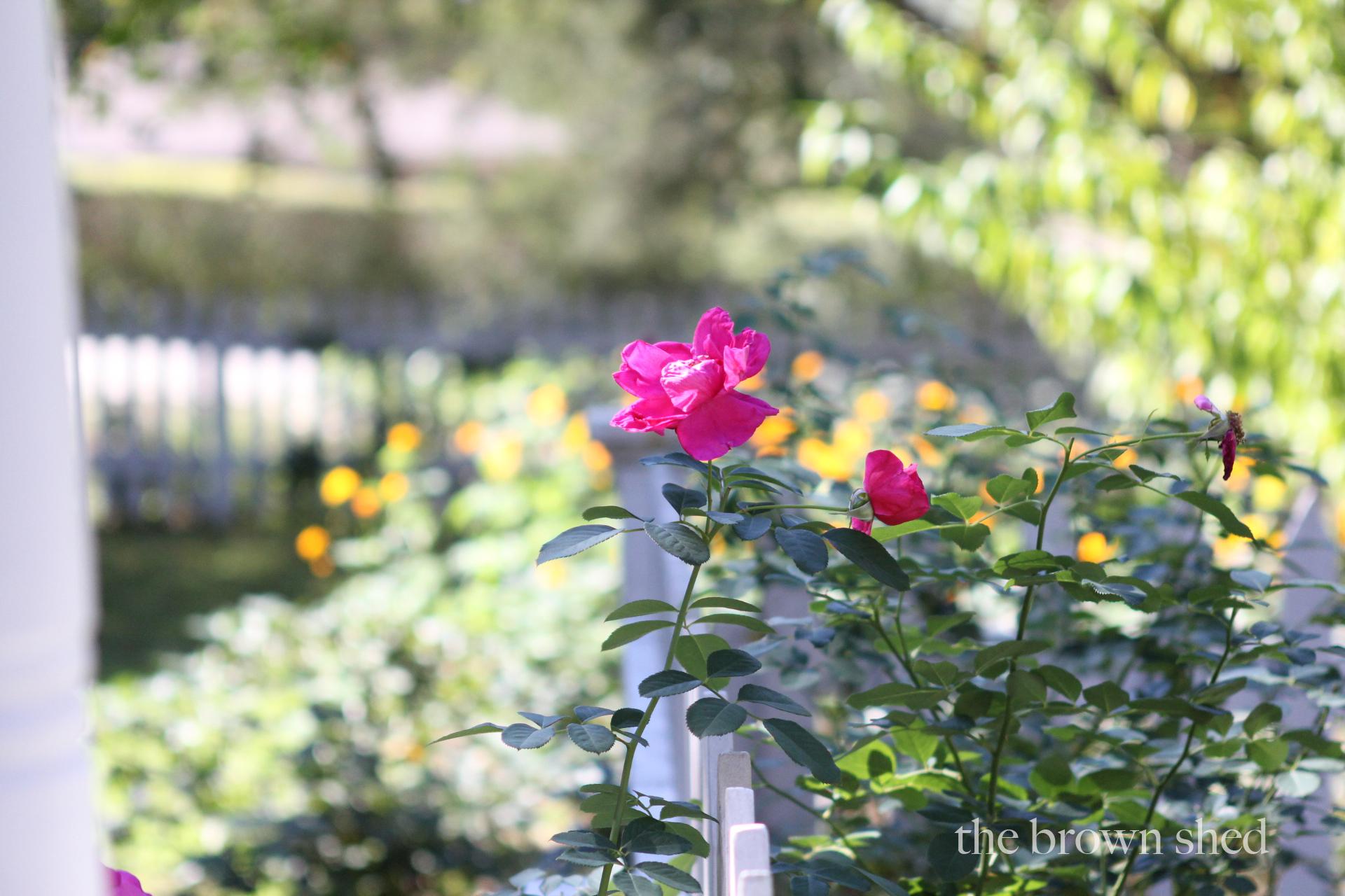 cottage garden | thebrownshed.com