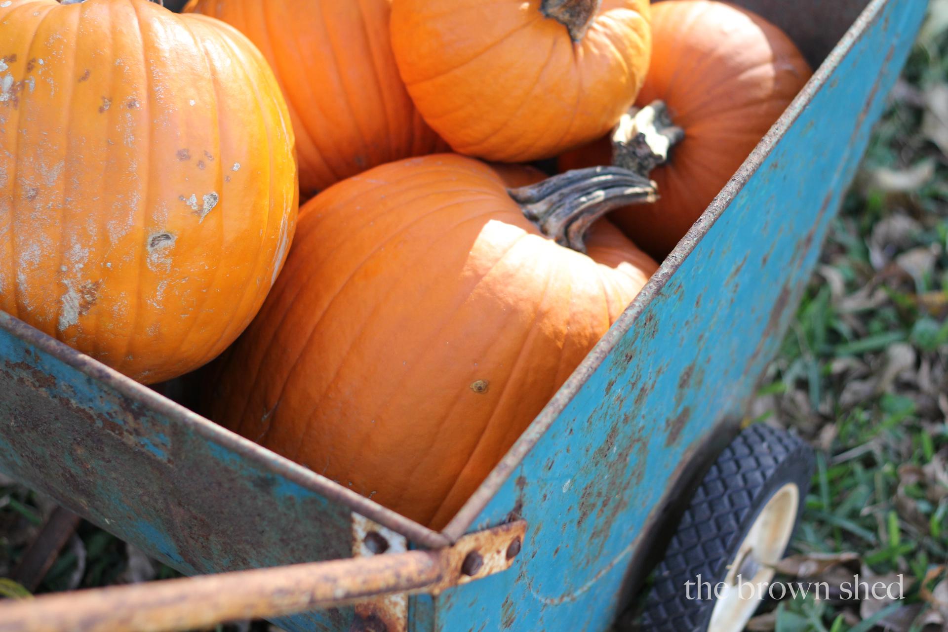 pumpkins | thebrownshed.com