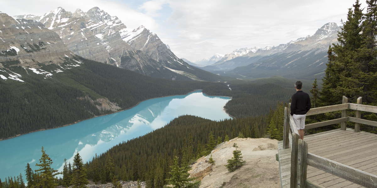 Magnificent Peyto!