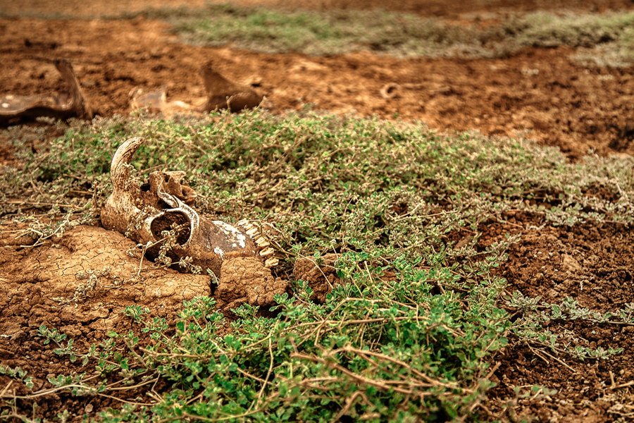Overgrown skeleton