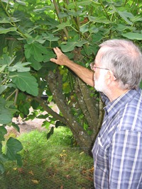 Bob Duncan with a fig tree.JPG