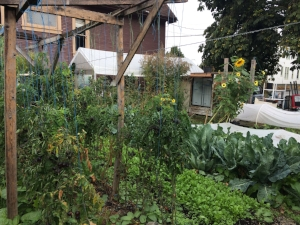 It's a quarter-acre patchwork of garden beds, trellised plants, greenhouses, the odd fruit tree—and a chicken coop too.