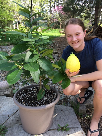 My daughter with a Ponderosa lemon harvested in the spring. It is everbearing; note the smaller lemons that will ripen later in the year.