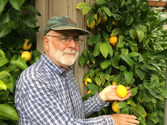 Citrus expert Bob Duncan of  Fruit Trees and More  on Vancouver Island says to remember the temperature at which the fruit freezes.