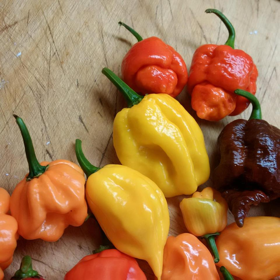 East York Chile Peppers c.jpg