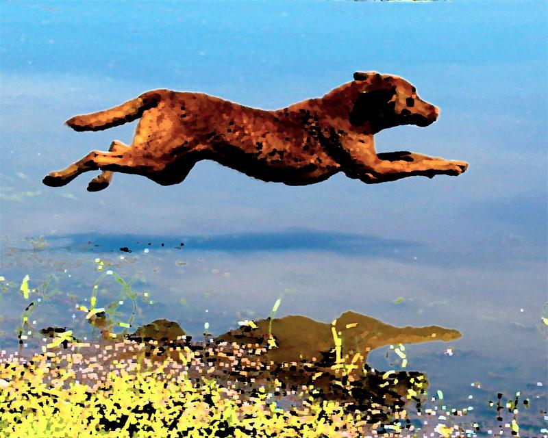 waterSchooner_leap_artWEB.jpg