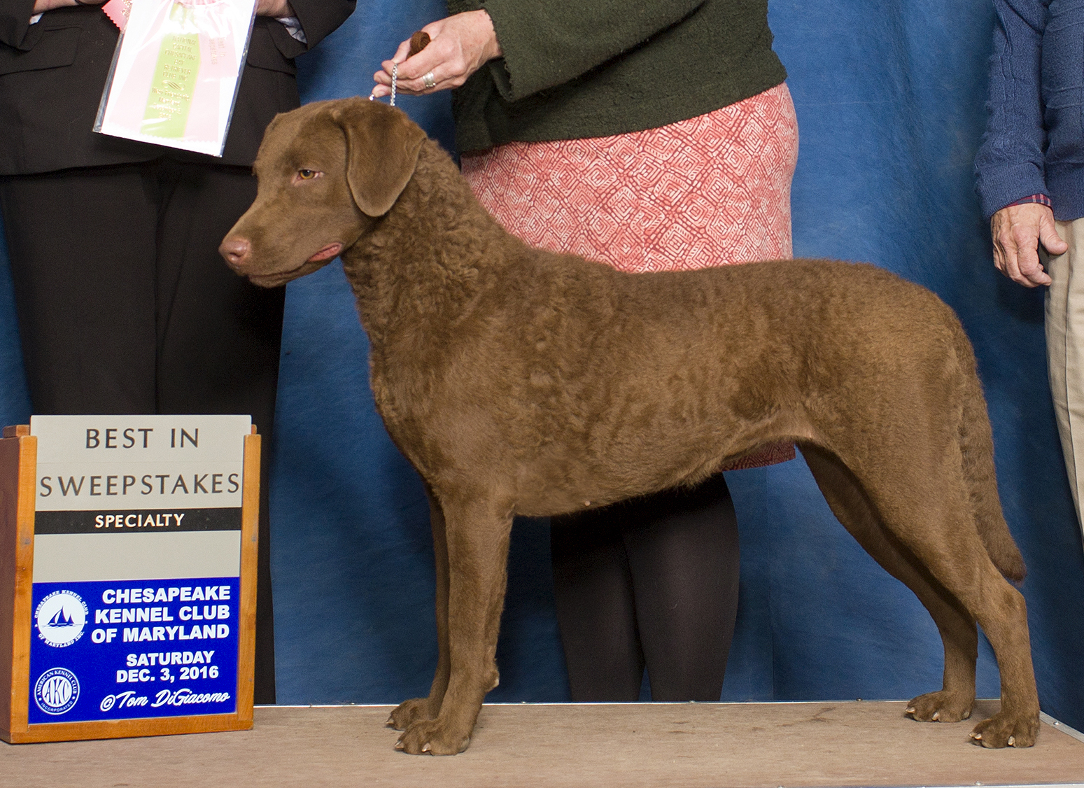 Weatherdeck Arnac Bay Gudgeon RATN CGC awarded Best in Puppy Sweepstakes at the National Capital Chesapeake Bay Retriever Club Specialty