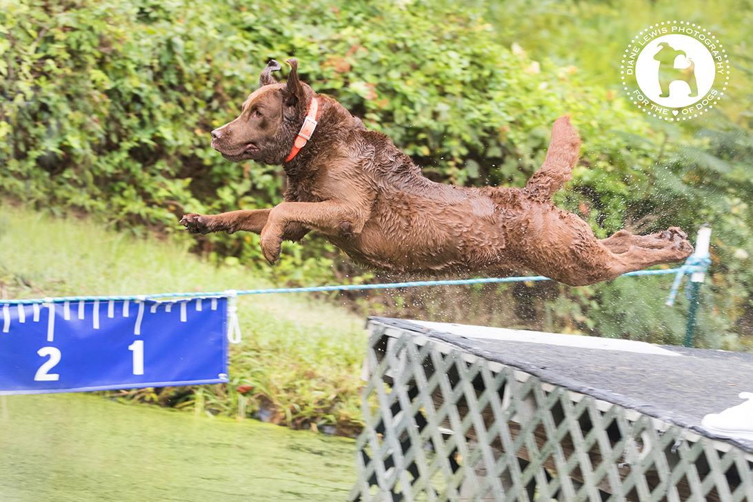 I adore the look on Brutus' face as he jumps. Expert throwing by Maria Kapsali. Photo Credit: Diane Lewis Photography.
