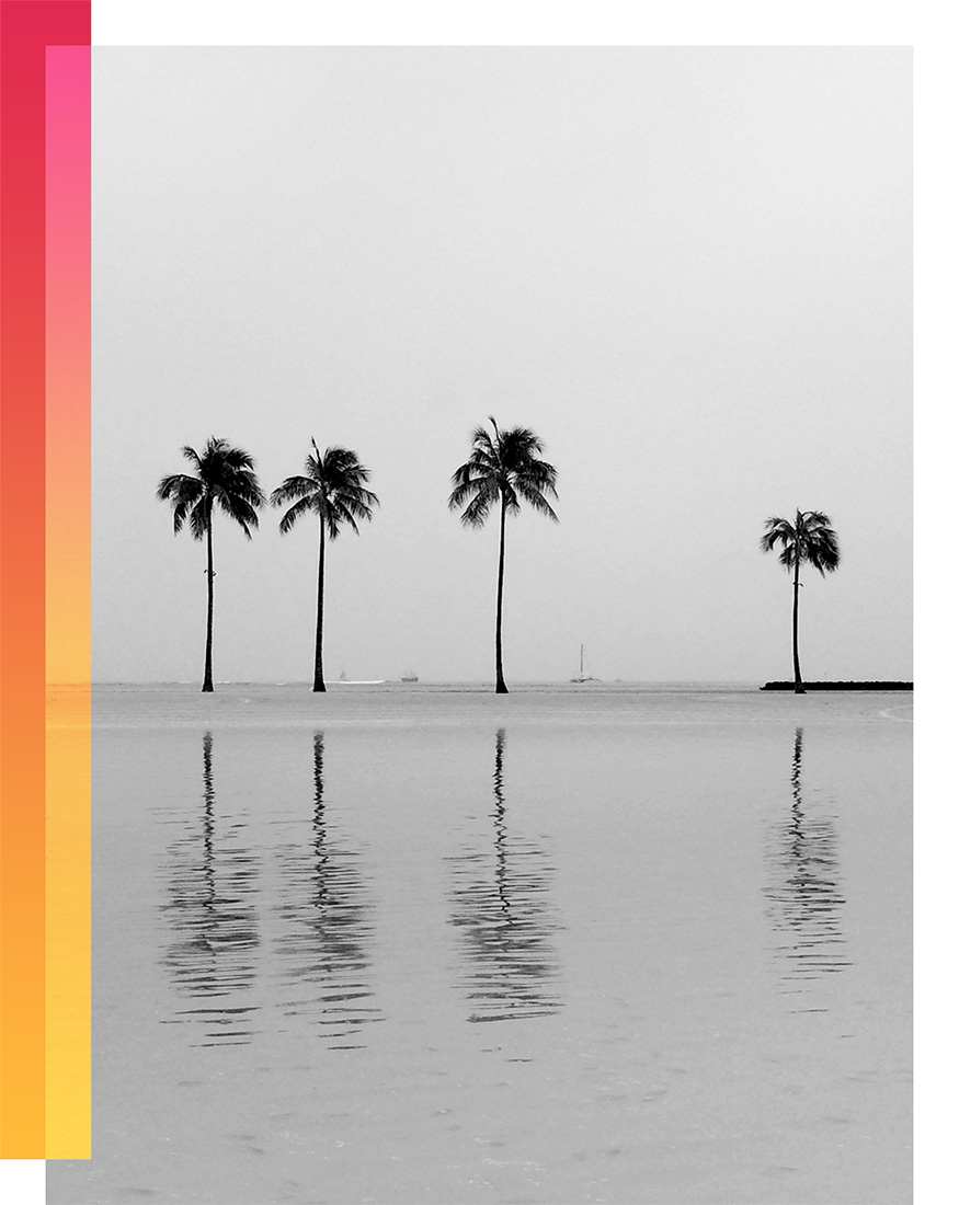BW Palms_sunset 2.jpg