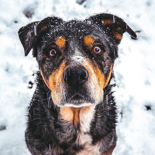 The cutest badger in all the land 😍💙 . . . #huffpostgram #dailybarker #optoutside  #instagrambham #exklusive_shot #snowday #ruffpost #weeklyfluff #thisisalabama #letitsnow #lifeofadventure #mydogiscutest #sendadogphoto #worldofcutepets #nikonnofilter #dogscorner #buzzfeedanimals #excellent_dogs #bestwoof #nikonlove #topdogphoto #bnw_legit #gramoftheday #vol #aov #visualshotz #ynotoutdoors #thegreatoutdogs #mysouthernliving #WHPclassic @instagram