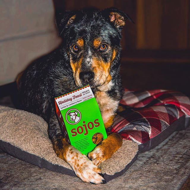 """No I don't want to leave any for Santa Paws. These are my cookies."" 😤🎅🏼🎄 . . . #huffpostgram #dailybarker #realsimple #instagrambham #exklusive_shot #ruffpost #weeklyfluff #sojos #thisisalabama #christmastreat #thestatelyhound #holidaytreats #lifeofadventure #mydogiscutest #doglife #sendadogphoto #worldofcutepets #nikonnofilter #dogscorner #buzzfeedanimals #excellent_dogs #bestwoof #nikonlove #topdogphoto #gallery_legit #vol #aov #mysouthernliving #santapaws @sojospetfood"