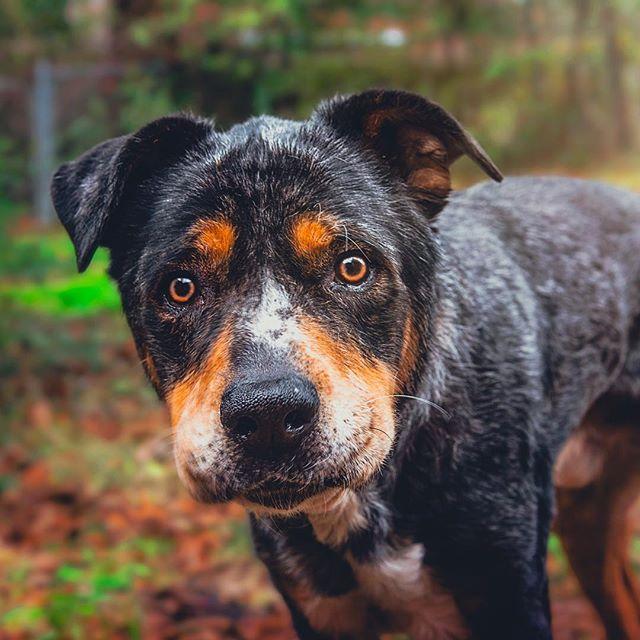Happy Monday! 🌞 . . . #huffpostgram #dailybarker #realsimple #instagrambham #exklusive_shot #ruffpost #weeklyfluff #thisisalabama #thestatelyhound #lifeofadventure #mydogiscutest #sendadogphoto #nikonnofilter #dogscorner #buzzfeedanimals #excellent_dogs #bestwoof #nikonlove #topdogphoto #gallery_legit #gramoftheday #vol #aov #visualshotz #optoutside #campingwithdogs #ynotoutdoors #thegreatoutdogs #alabamaphotographer #mysouthernliving