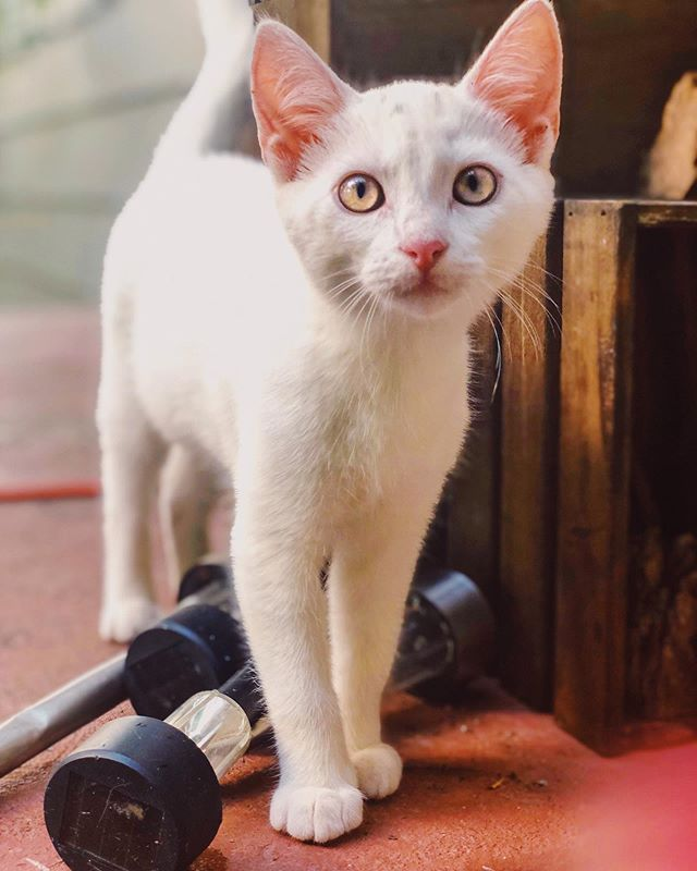 you cat to be kitten me right meow 😻 . #magiccitykitties #catsofbham #bestmeow #weeklyfluff #instagrambham #shotoniphone