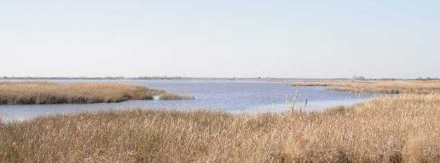 backbaywildliferefuge.jpg