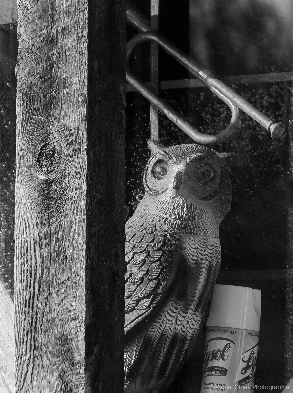 That is no owl's life OLNEY Photographe Sherbrooke