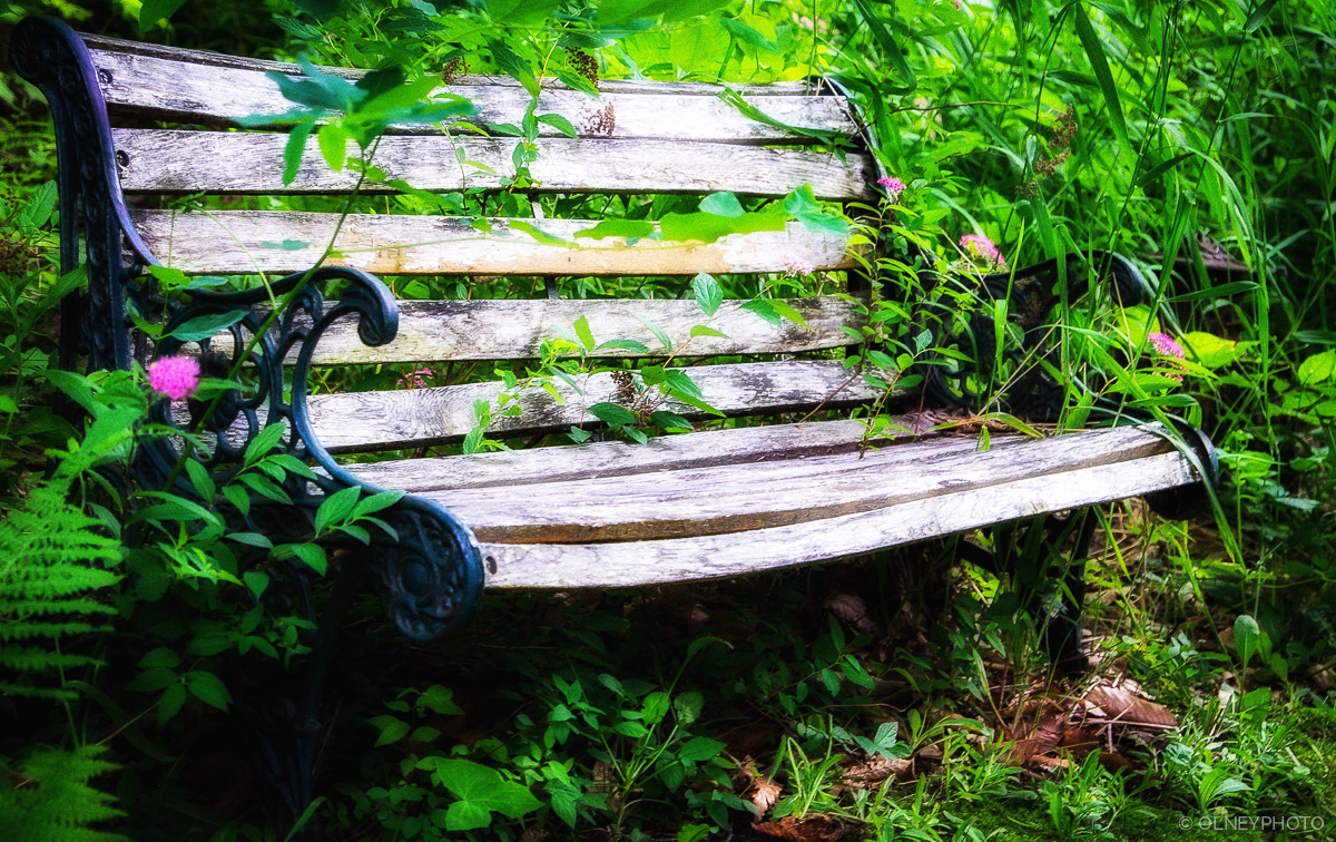 Used and battered bench OLNEY Photographe Sherbrooke