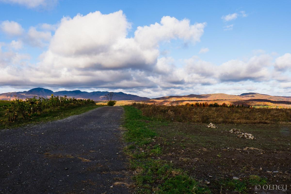 Vue de Citrouilles et Tournesols - Un autre point de vue paysage OLNEY Photographe Sherbrooke