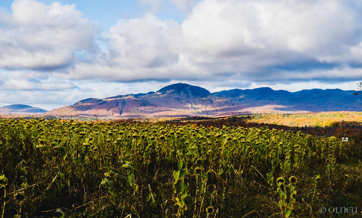 View of Orford from Citrouilles et Tournesols - Un autre point de vue paysage OLNEY Photographe Sherbrooke