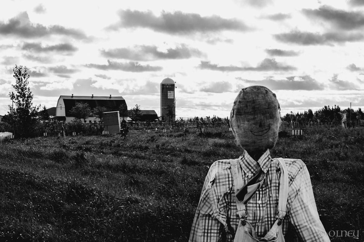 Scarecrow at Citrouilles et Tournesols - Un autre point de vue paysage OLNEY Photographe Sherbrooke