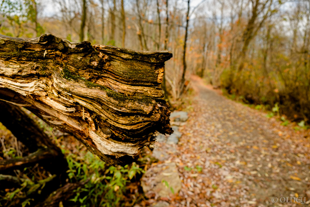 Downed tree trunk OLNEY Photographe Sherbrooke