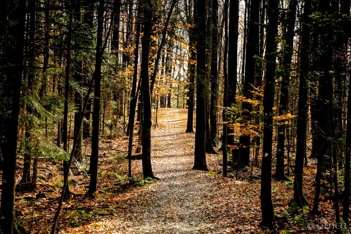 Sentier du bois Beckett en automne à Sherbrooke OLNEY Photographe