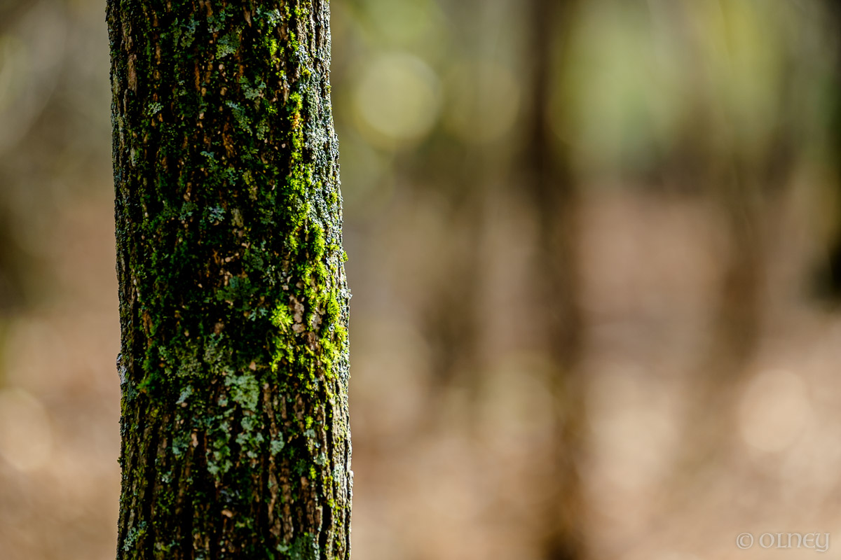 Green moss on a tree trunk OLNEY Photographe Sherbrooke