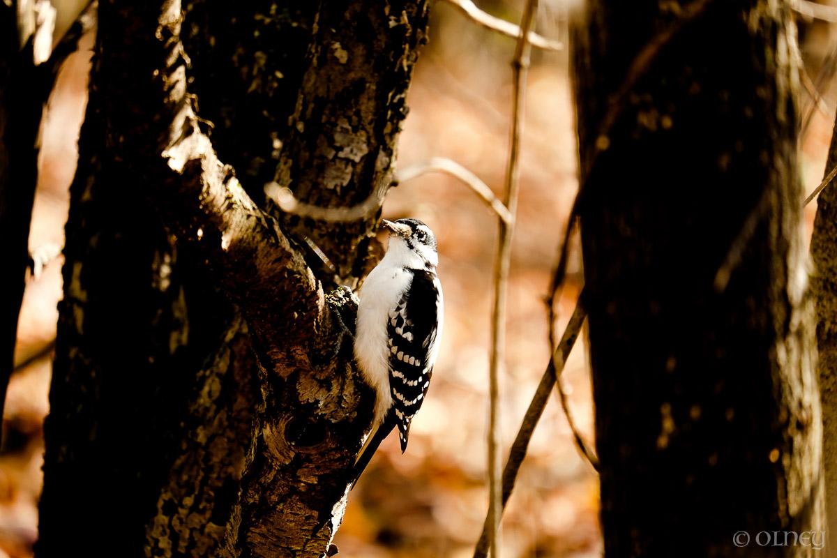 Pic commun au Bois Beckett à Sherbrooke OLNEY Photographe