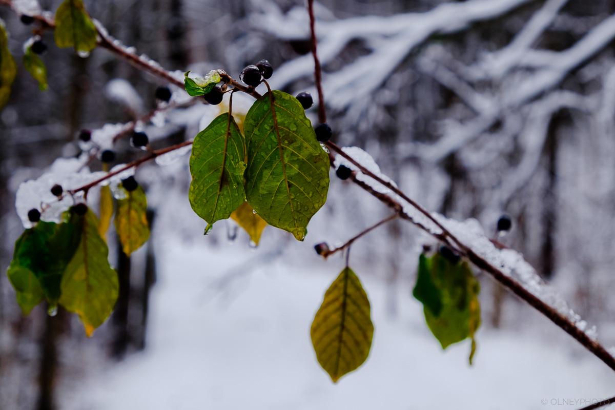 Feuilles vertes en travers d'en sentier OLNEY Photographe Sherbrooke