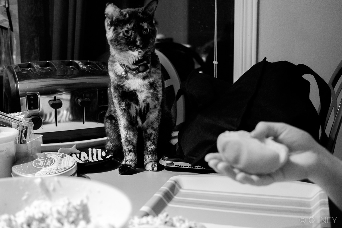 Cat eyeing the sandwiches at Christmas olney photographe sherbrooke